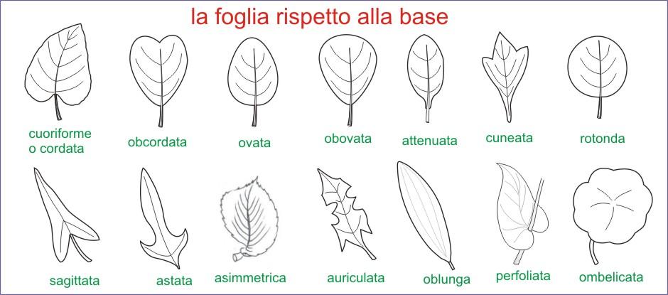 Amint tavole di morfologia vegetale le foglie for Pianta con la c