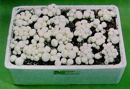Risultati immagini per coltivare funghi