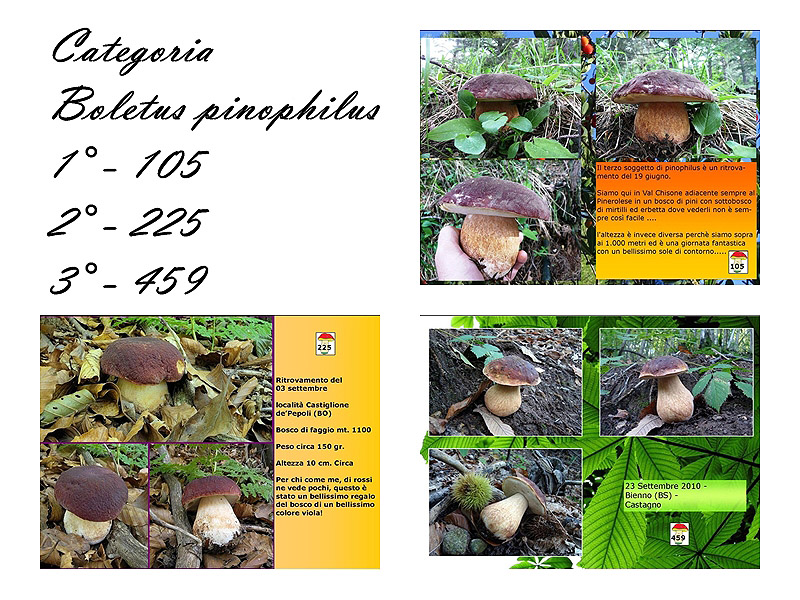 pinophilus.jpg
