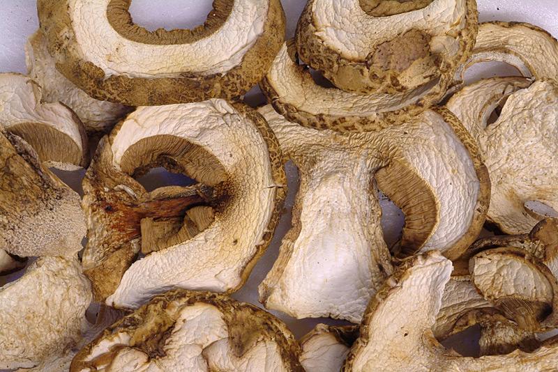 min-NicolaSitta_porcini-secchi-pinophilus-Amiata-maggio-3.jpg