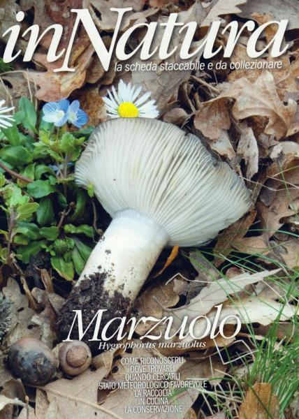 Marzuolo-001.jpg