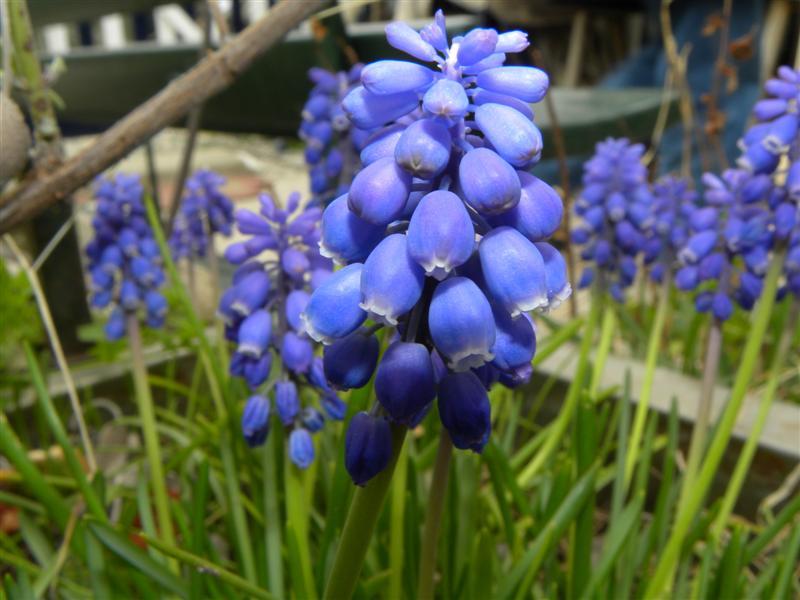 16 marzo 2012 035 (Medium).jpg