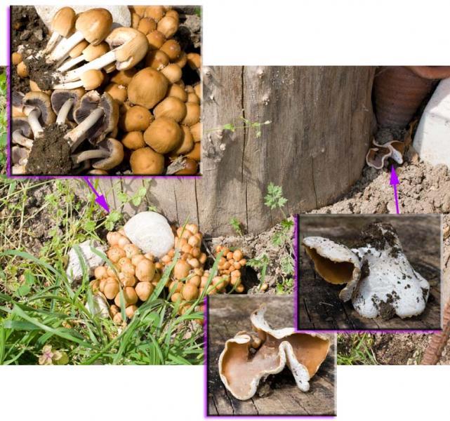 I migliori mezzi da un fungo su pareti