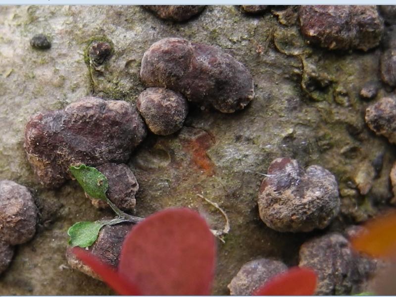 Quale unguento usare da funghi su unghie