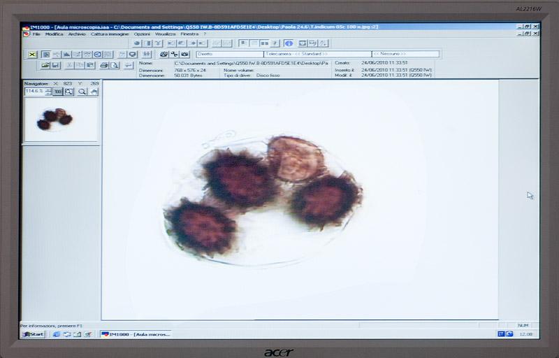 Micro-PG-23b-Tuber-indicum.jpg