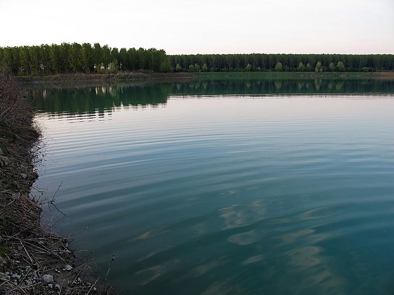 10-recupero-pesce-area-golenale del Po-gualtieri-CMG_0181.jpg