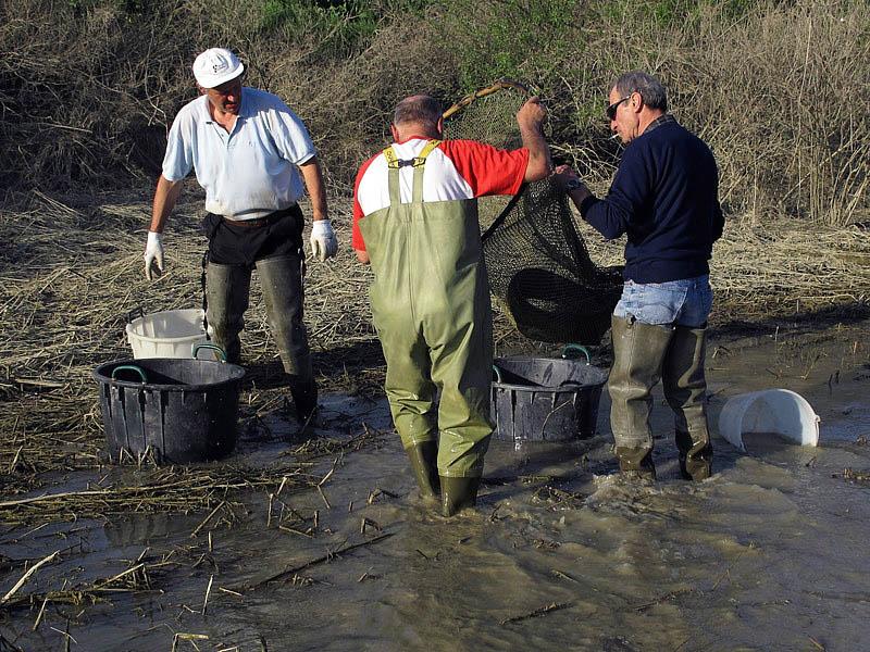 2-recupero-pesce-area-golenale del Po-gualtieri-CMG_0161.jpg