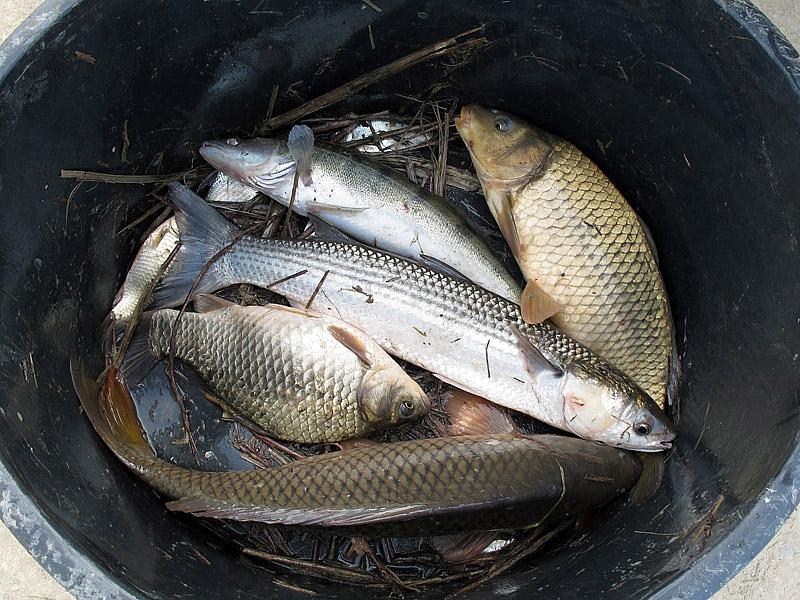 5-recupero-pesce-area-golenale del Po-gualtieri-CMG_0197.jpg