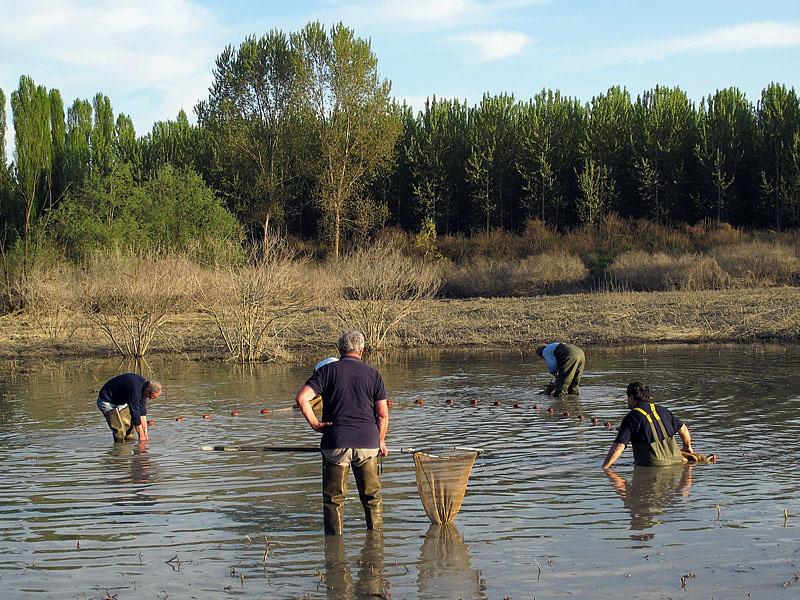 1-recupero-pesce-area-golenale del Po-gualtieri-CMG_0168.jpg