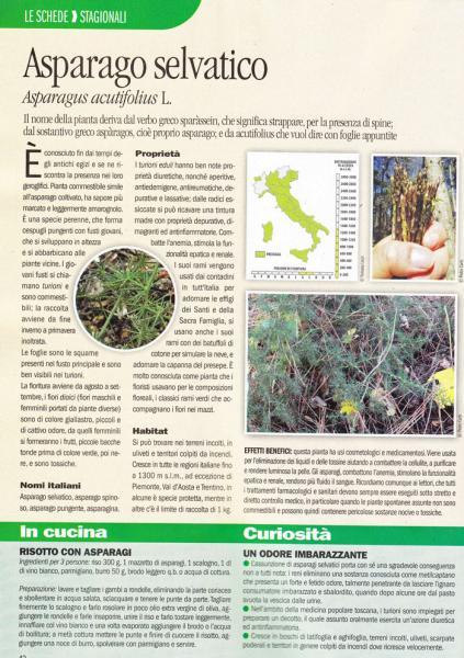 asparago.jpg