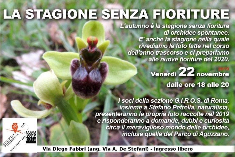 112219_orchidee-768x512.jpg