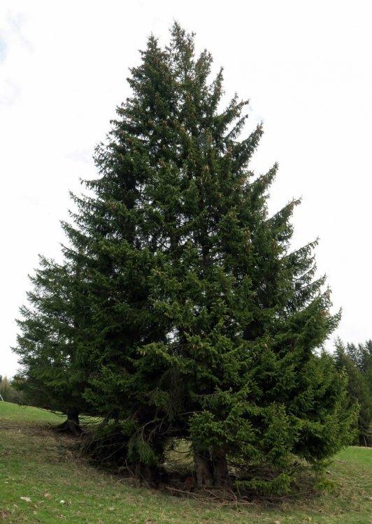 albero.thumb.jpg.d82fdb70cca203868d5c7ebbabf6db46.jpg