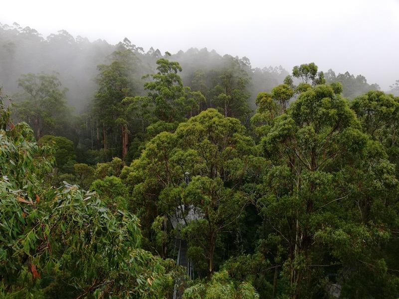 Australia 1b.jpg