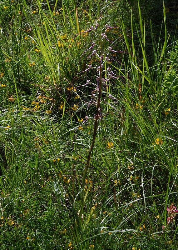 ac.JPG.8e4040f670b083f5ba11cb1dfcfceae5.JPG