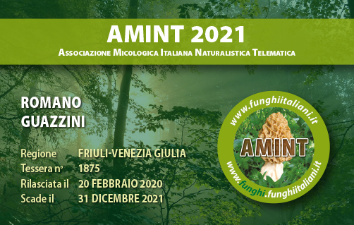Tessera AMINT 1875 2021.jpg