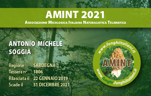 Tessera AMINT 1806 2021.jpg