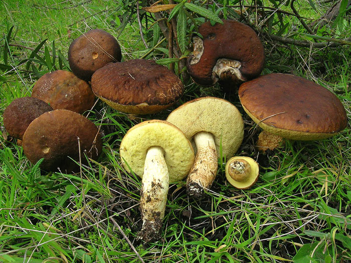 Mezzi da un fungo vecchio di posizione di unghie