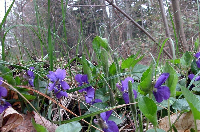 violetteDSCN6042.jpg
