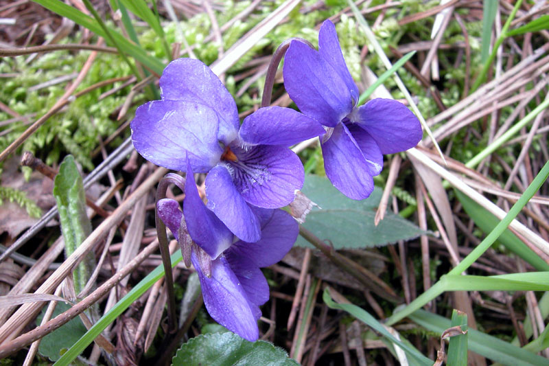 violetteDSCN6006.jpg