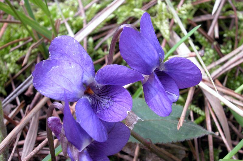 violetteDSCN6009.jpg