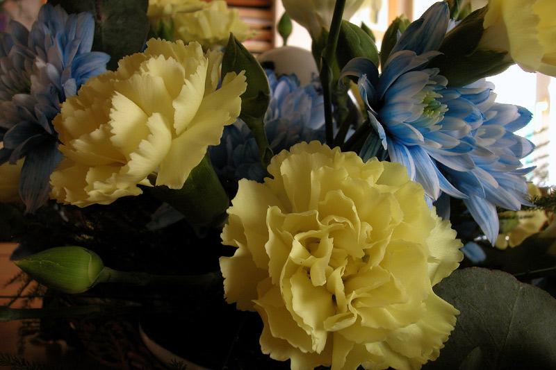 fiori_casaDSCN6271.jpg