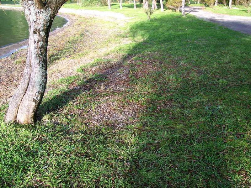 terreno per tartufi - i tartufi - funghi in italia - fiori in ... - Piante Simbionti Del Tartufo Foto