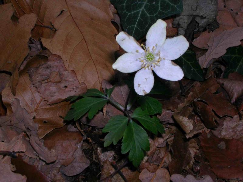 fiore3.jpg